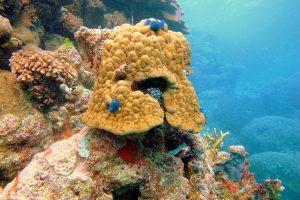 Eukaryotes - Coral